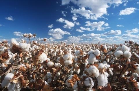 What is organic cotton? オーガニックコットンについて話そう